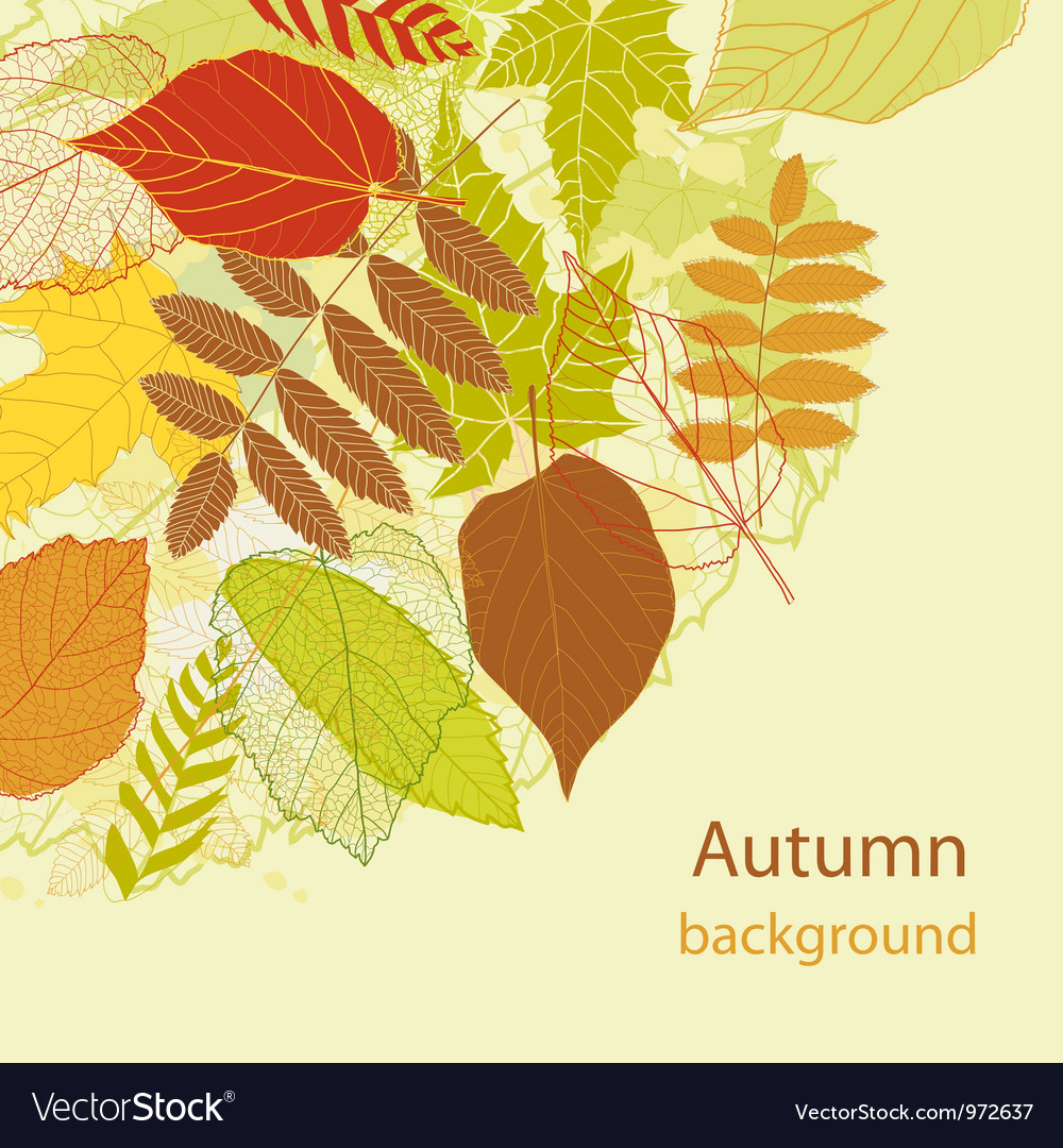 Autumnal bright leaf background vector | Price: 1 Credit (USD $1)