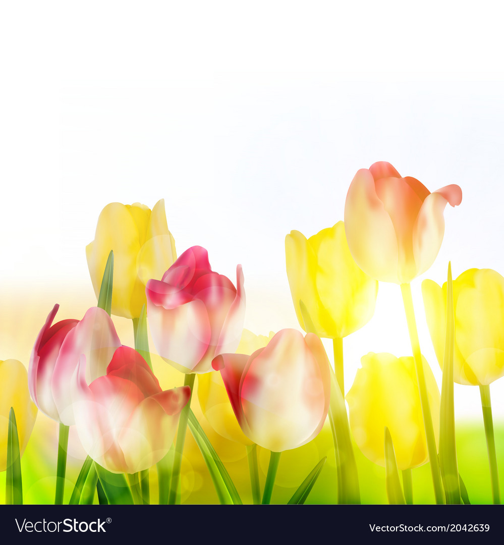 Beautiful tulips in spring time eps 10 vector   Price: 1 Credit (USD $1)