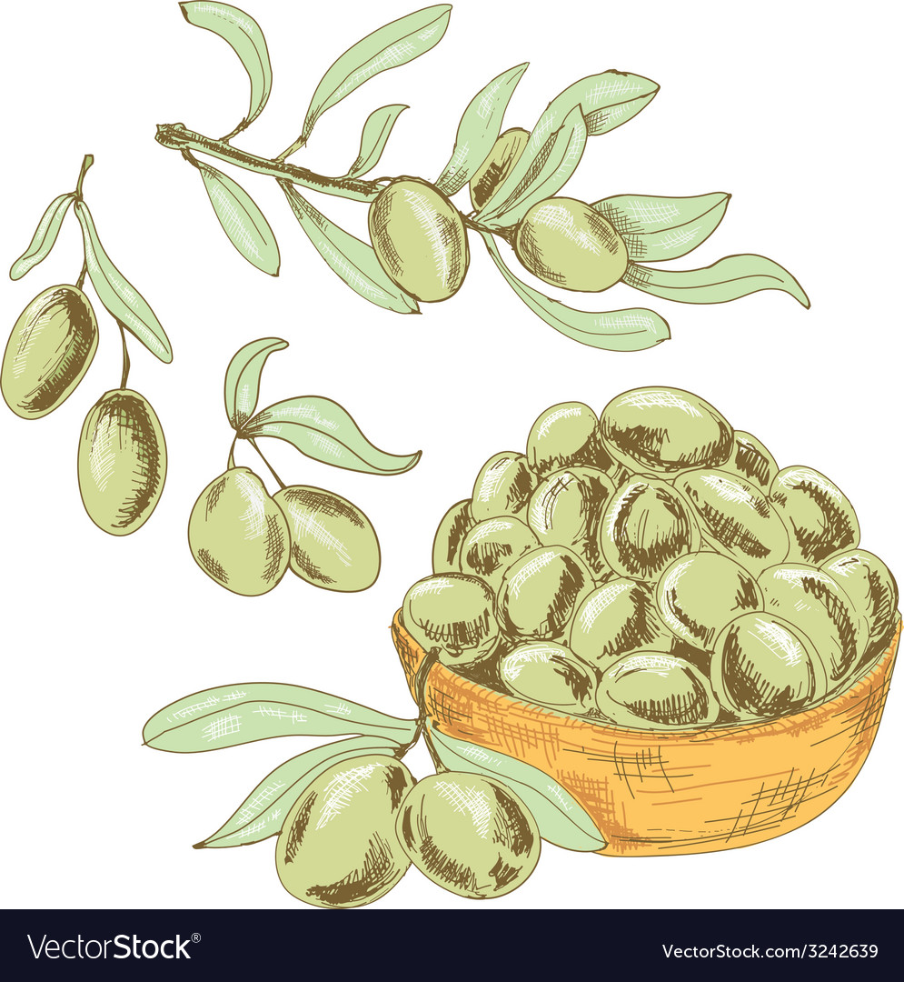 Collection of olives vector | Price: 1 Credit (USD $1)