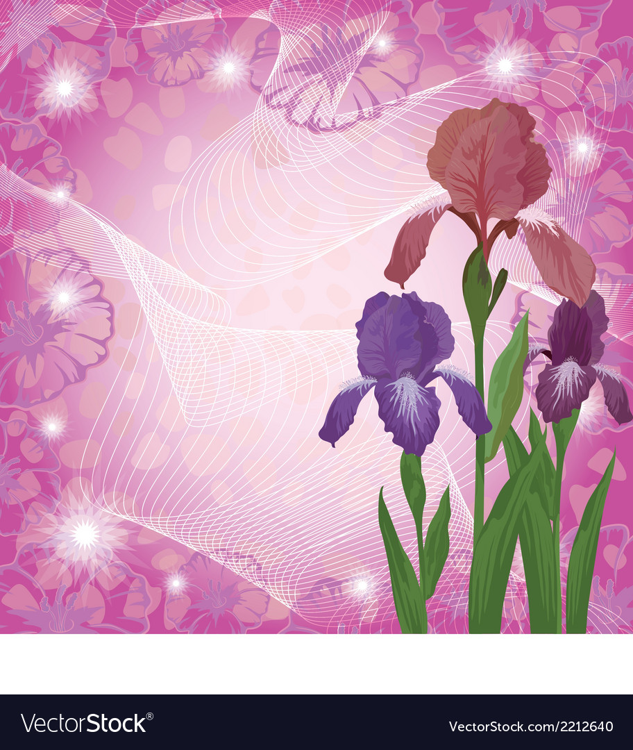 Flowers iris and ipomoea contours vector | Price: 1 Credit (USD $1)