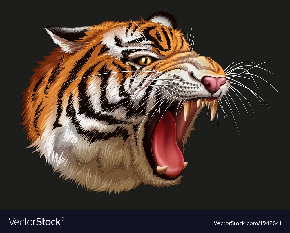 A head of a roaring tiger vector | Price: 3 Credit (USD $3)
