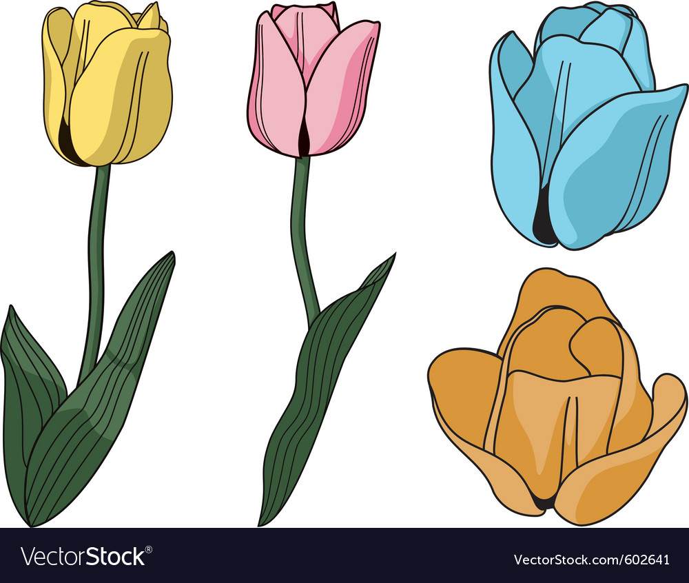 Brightly colored tulip flowers vector | Price: 1 Credit (USD $1)