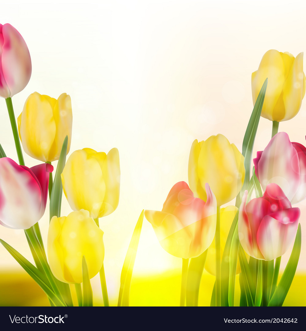 Green grass and pink tulips eps 10 vector | Price: 1 Credit (USD $1)