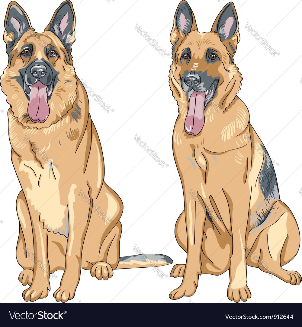 Two dog german shepherd breed vector | Price: 3 Credit (USD $3)