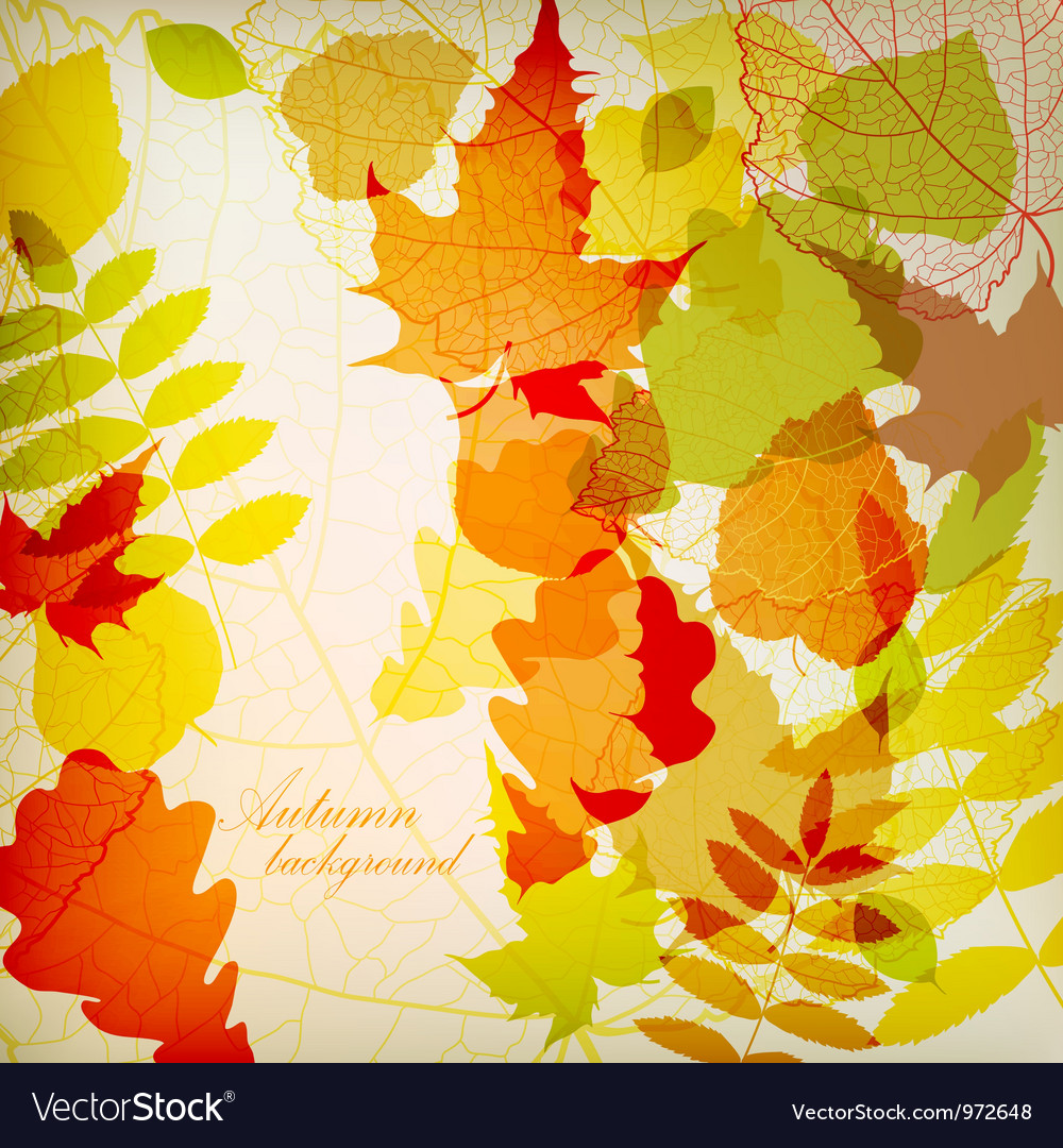 Bright colorful autumn leaves vector | Price: 1 Credit (USD $1)