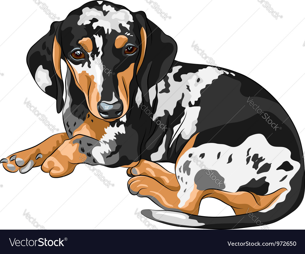 Miniature dachshund vector | Price: 3 Credit (USD $3)