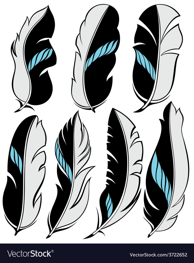 Set of beautiful stylish feathers vector | Price: 1 Credit (USD $1)