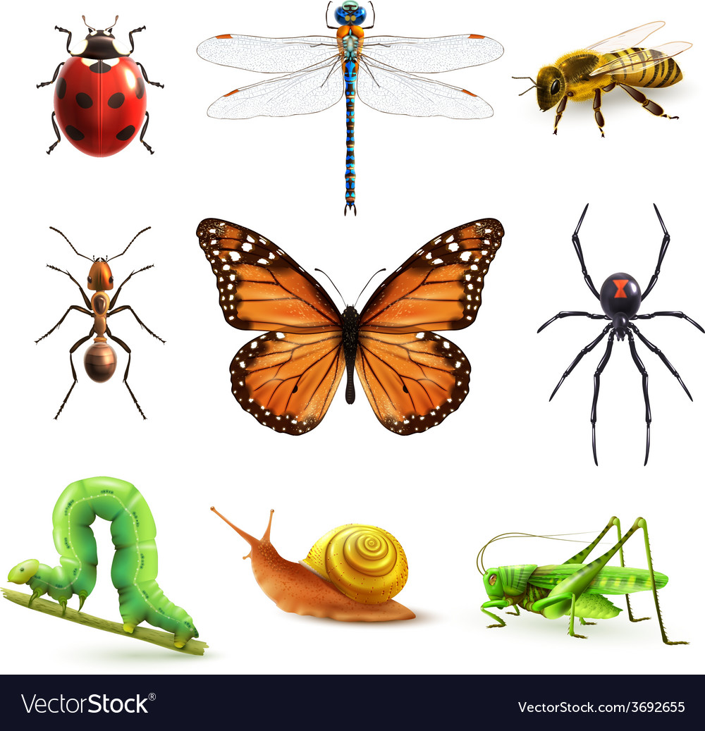 Insects realistic set vector | Price: 3 Credit (USD $3)