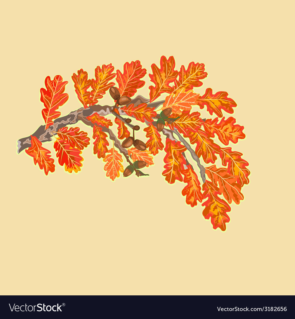 Branch of oak with leaves and acorns autumn theme vector | Price: 1 Credit (USD $1)