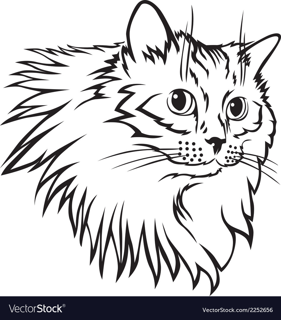 Cat furry mane vector | Price: 1 Credit (USD $1)