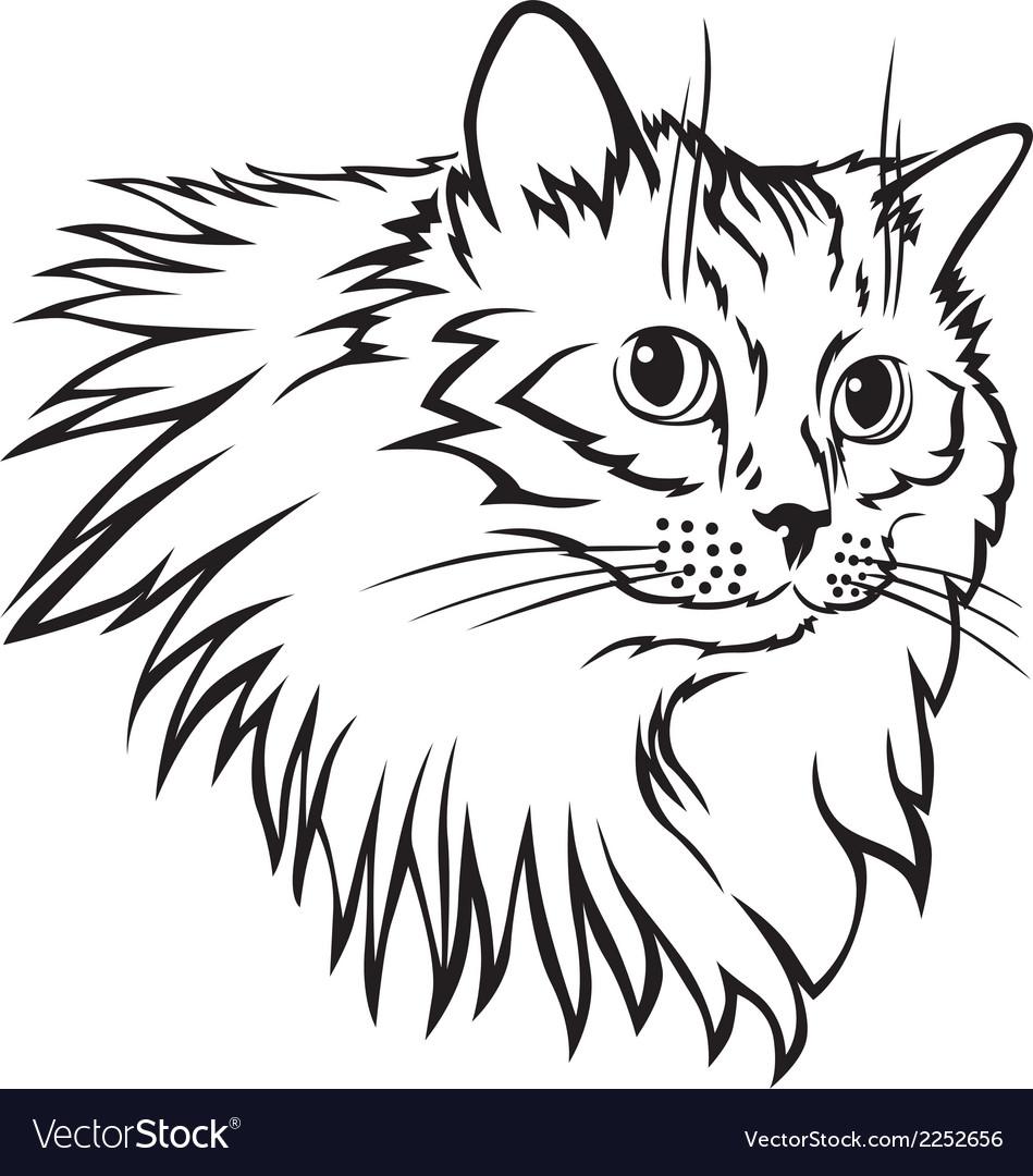 Cat furry mane vector | Price: 1 Credit (USD $1)