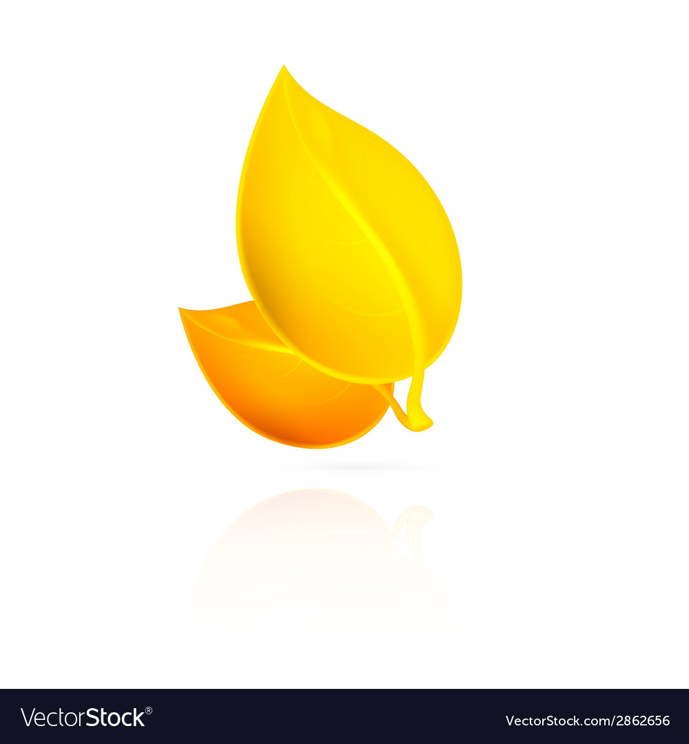 Yellow leaves on white background vector | Price: 1 Credit (USD $1)