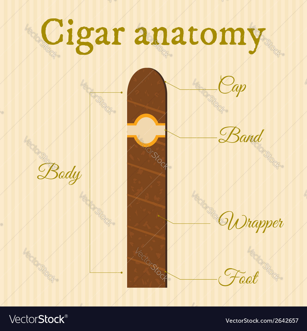 Cigar structure1 vector | Price: 1 Credit (USD $1)