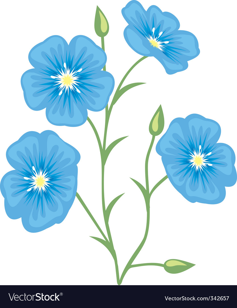 Flower of flax linum usitatis vector | Price: 1 Credit (USD $1)