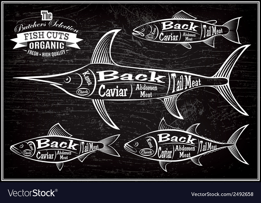 Diagram cut carcasses salmon swordfish herring tun vector | Price: 1 Credit (USD $1)
