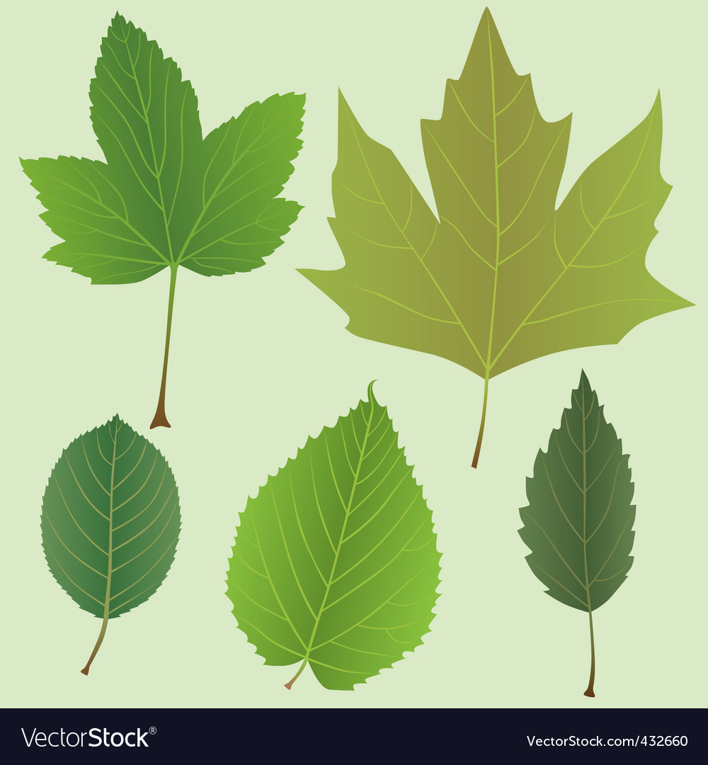 Green leaves set vector   Price: 1 Credit (USD $1)