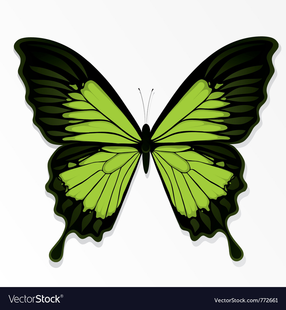 Green butterfly vector | Price: 1 Credit (USD $1)