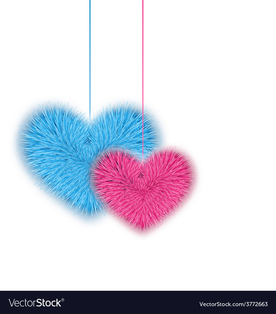 Fur pink and blue hearts for valentines day vector | Price: 1 Credit (USD $1)