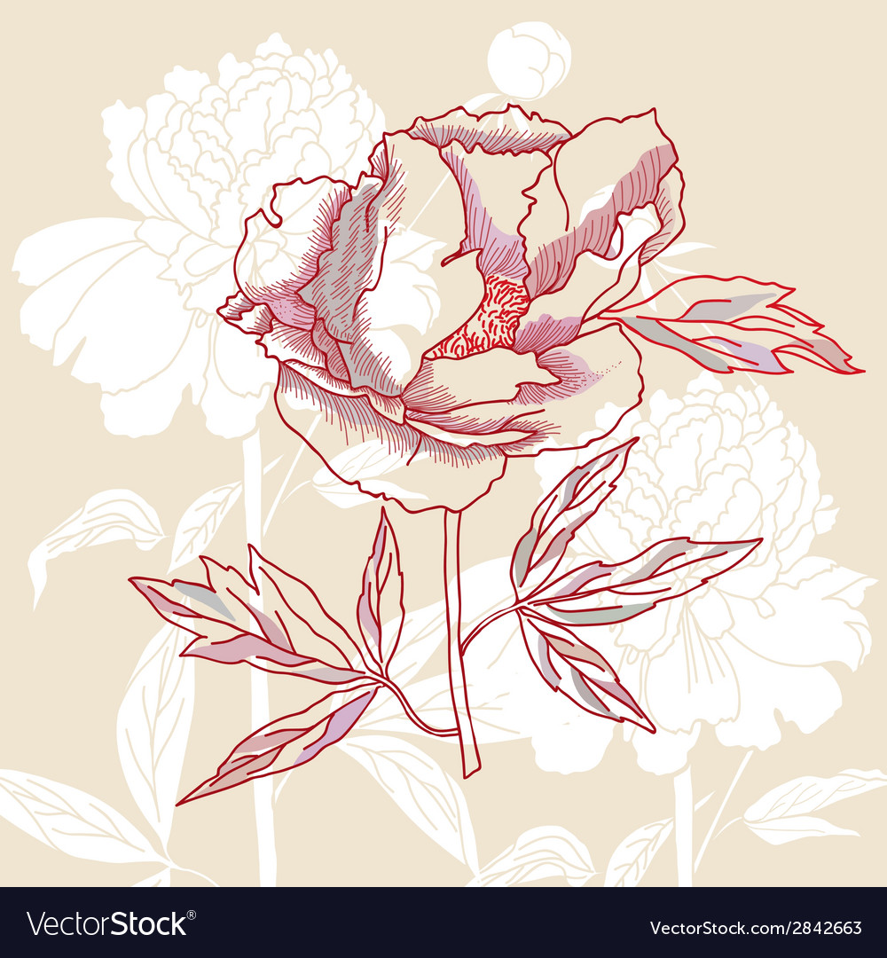 One peony on background vector | Price: 1 Credit (USD $1)