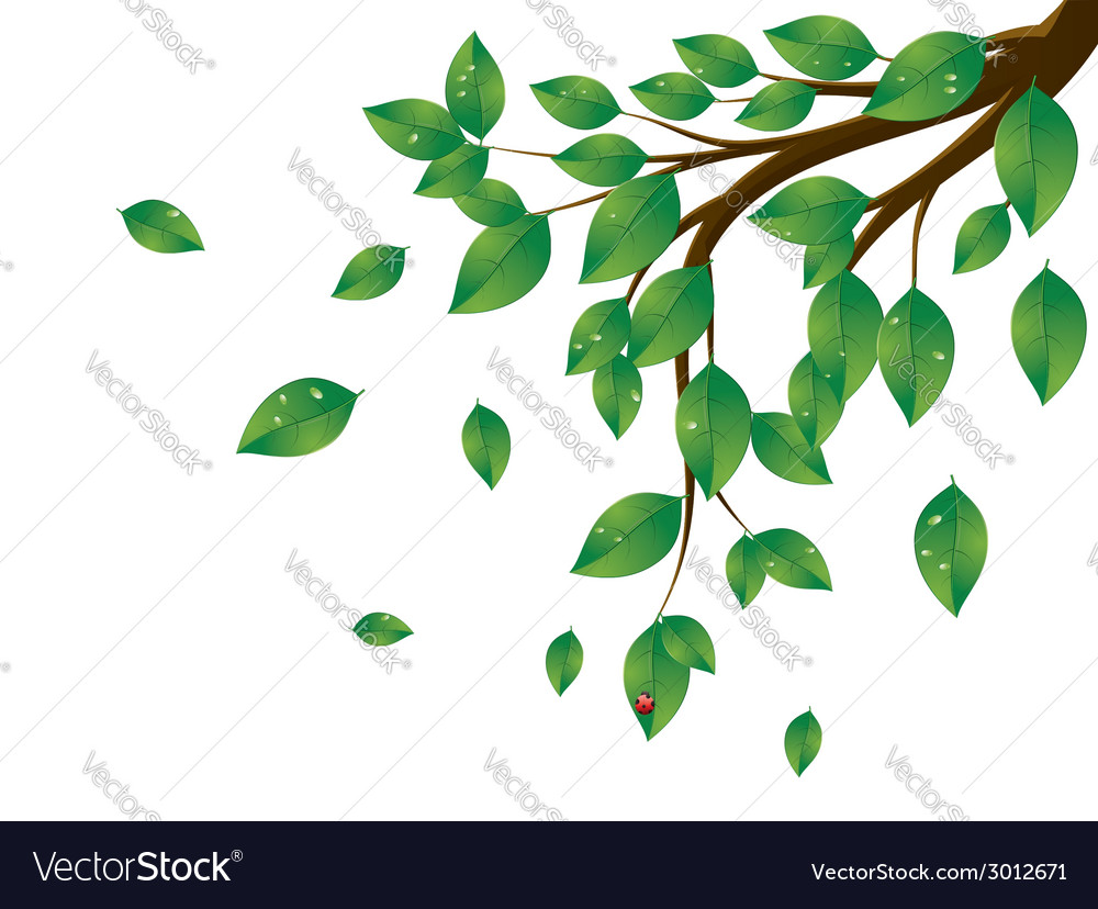 Green leaves tree branch3 vector | Price: 1 Credit (USD $1)