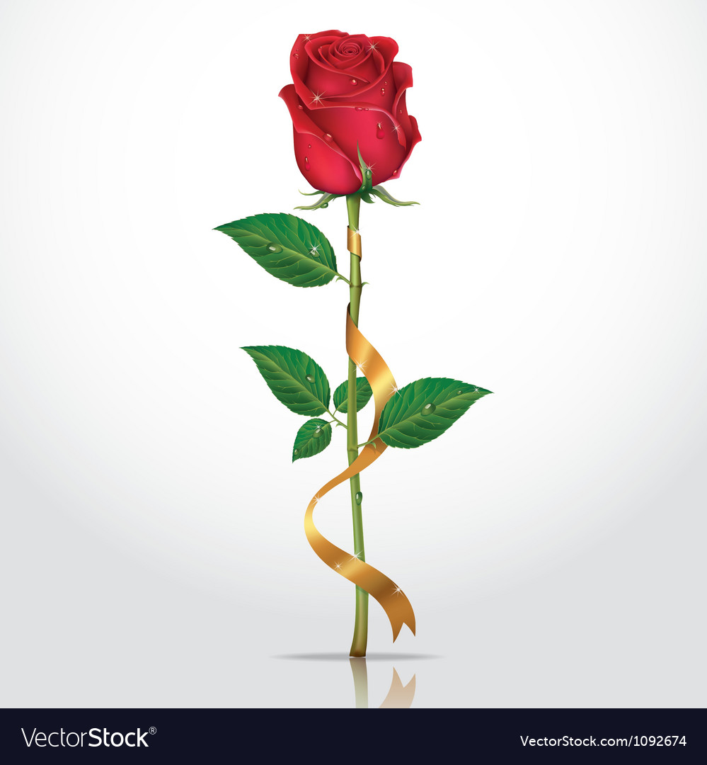 Beautiful red rose with gold ribbon vector | Price: 1 Credit (USD $1)