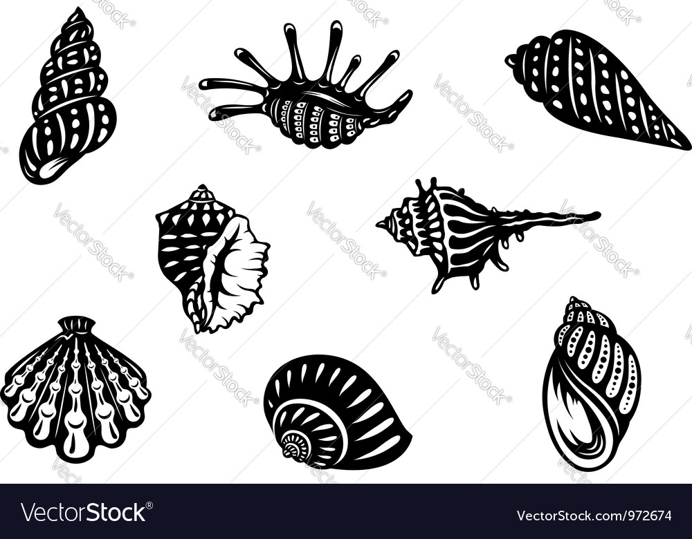 Sea shells and mollusks vector | Price: 1 Credit (USD $1)