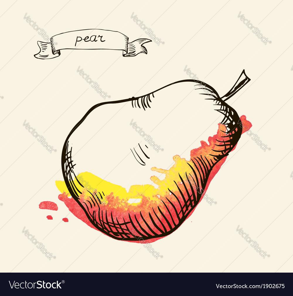 Pear sketch vector   Price: 1 Credit (USD $1)
