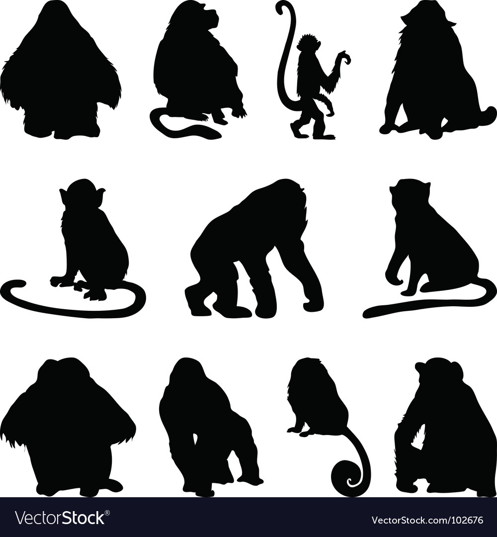 Apes silhouettes set vector