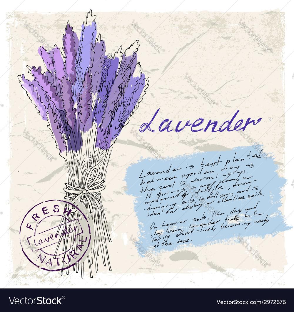 Lavender vector   Price: 1 Credit (USD $1)