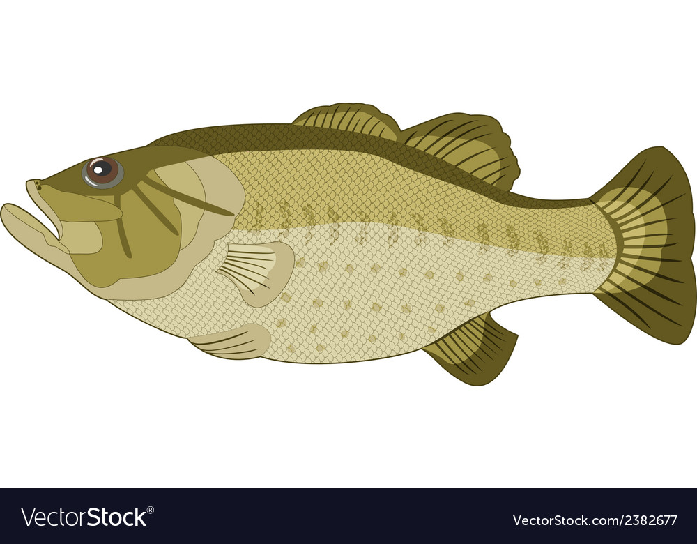 Image of fish on a white background vector | Price: 1 Credit (USD $1)