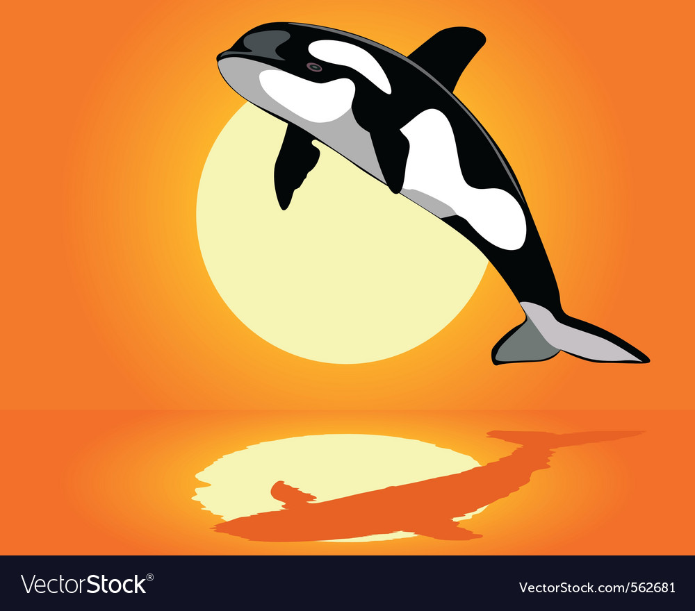Killer whale over the water vector | Price: 1 Credit (USD $1)