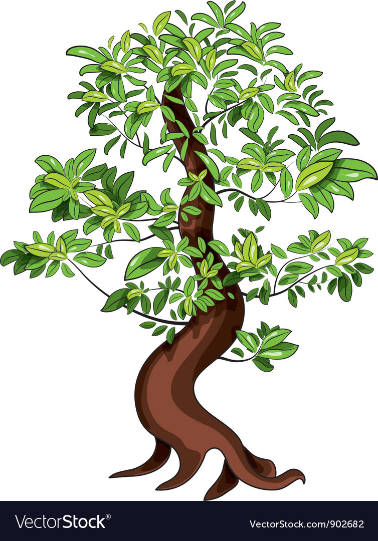 Ficus bonsai vector | Price: 1 Credit (USD $1)