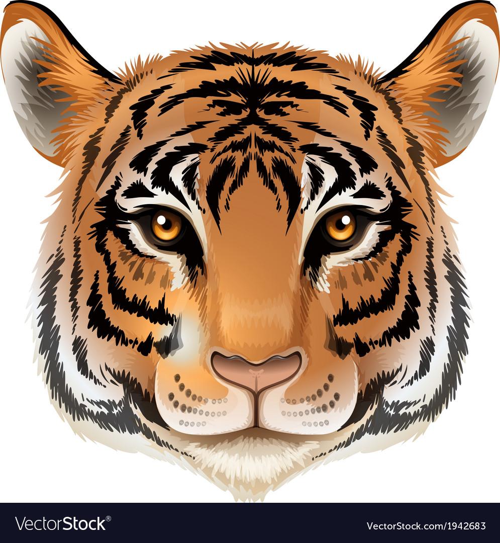 A head of a tiger vector   Price: 3 Credit (USD $3)