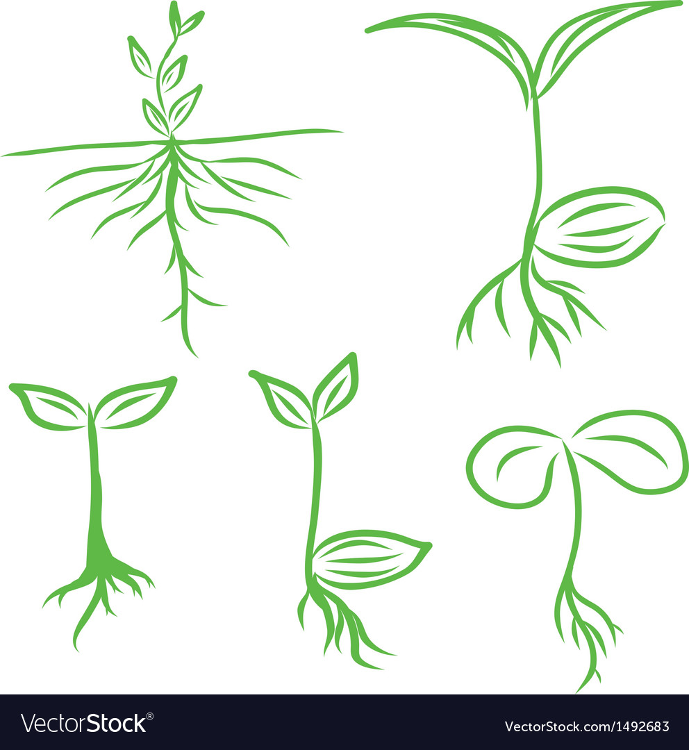 Set hand draw sprouts plants seeding vector