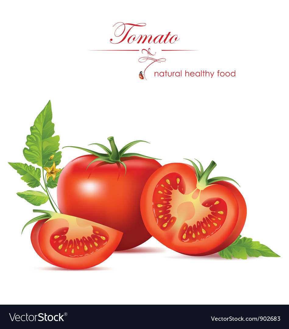 Tomato vector | Price: 3 Credit (USD $3)