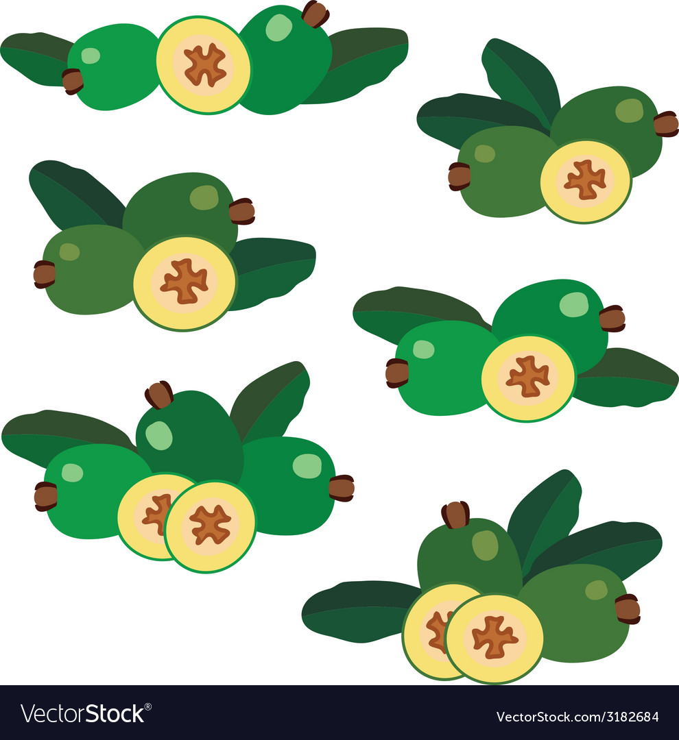 Feijoa different composition of berries icons vector | Price: 1 Credit (USD $1)