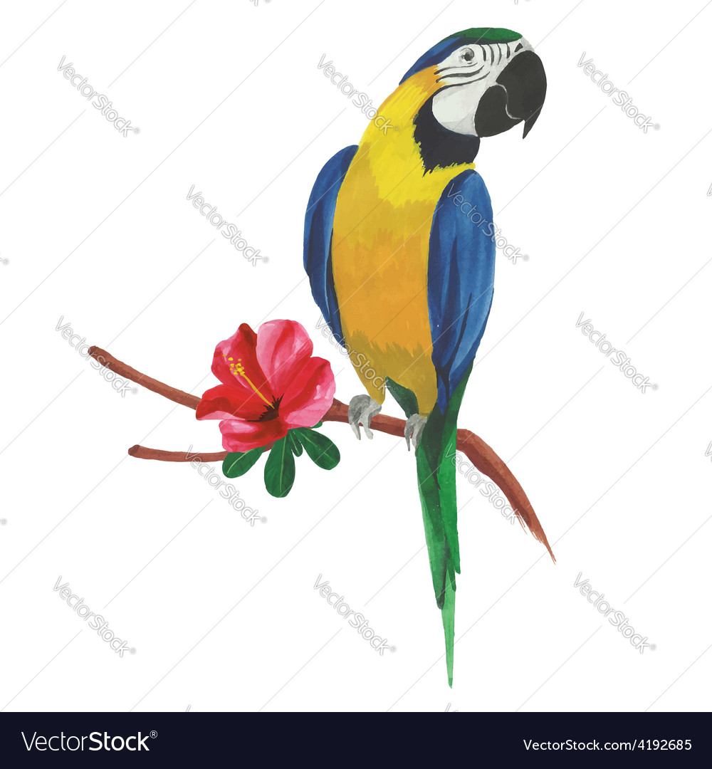 Isolated watercolor parrot with tropical flowers vector | Price: 1 Credit (USD $1)
