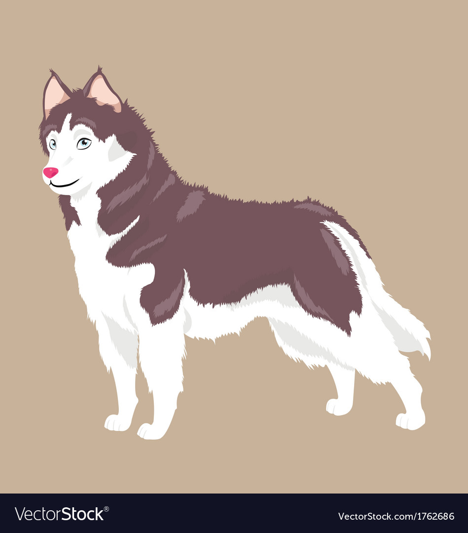 Husky dog vector | Price: 1 Credit (USD $1)