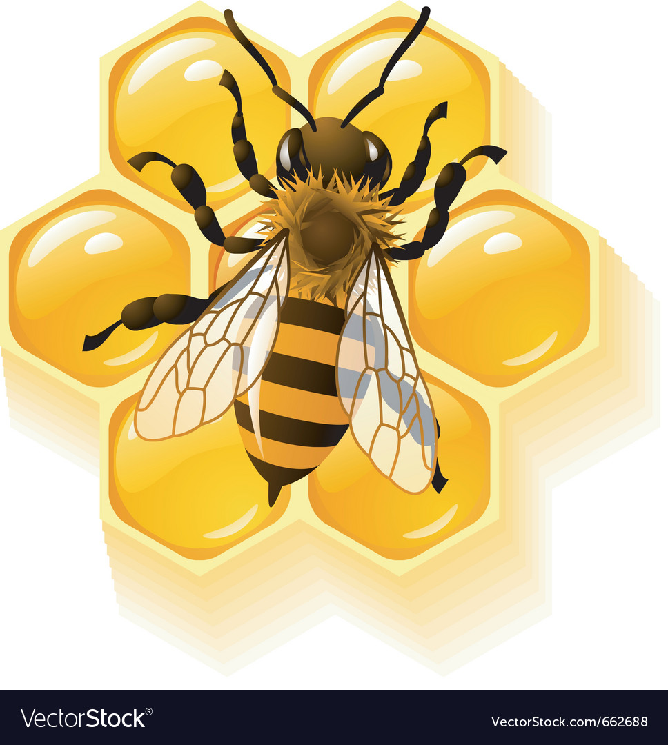 Bee and honeycombs vector | Price: 3 Credit (USD $3)