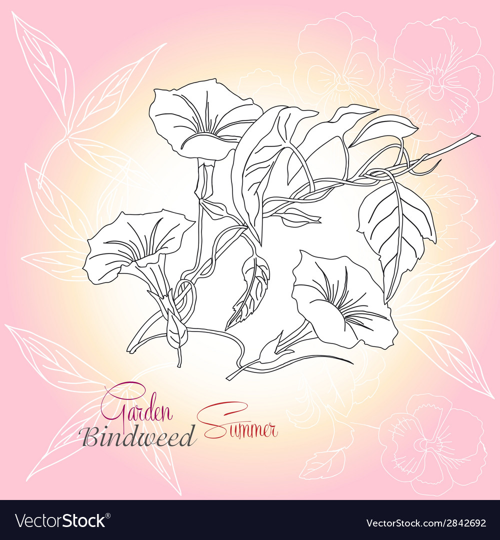 Pink background with pansies and bindweed vector | Price: 1 Credit (USD $1)