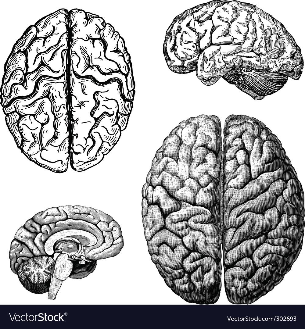 Brain illustrations vector | Price: 1 Credit (USD $1)