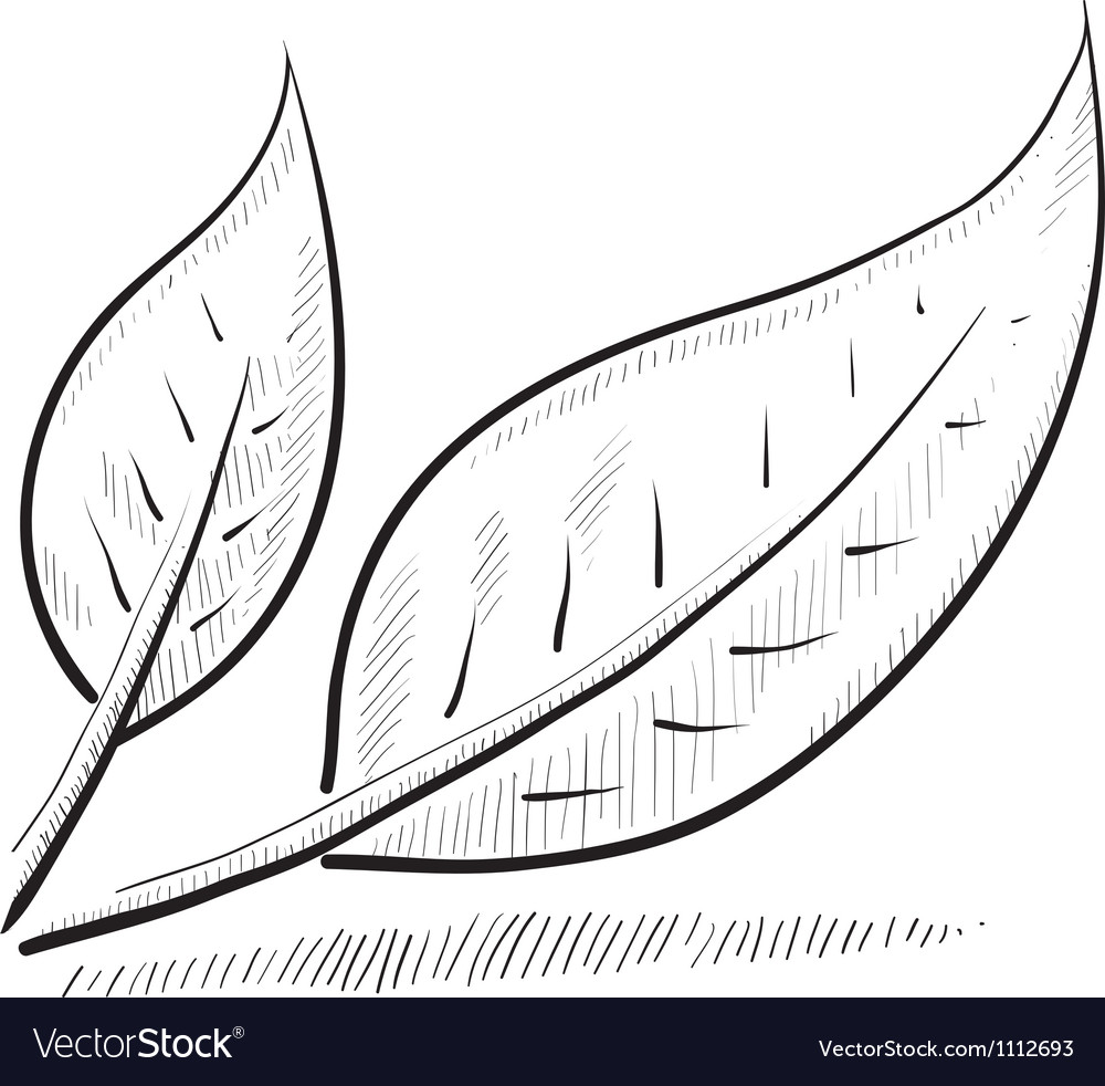 Doodle leaves green nature vector | Price: 1 Credit (USD $1)