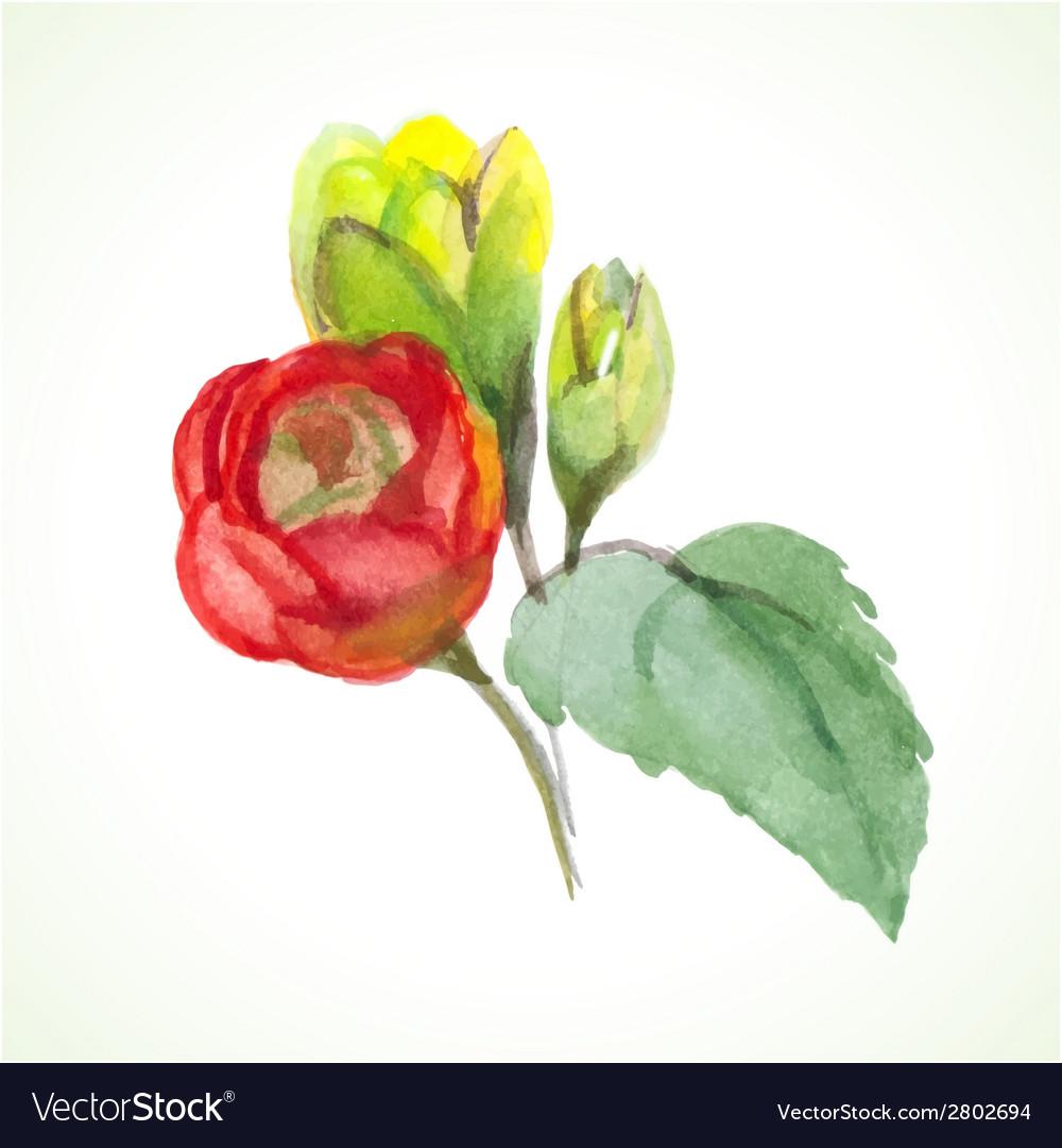 Watercolor flower vector | Price: 1 Credit (USD $1)