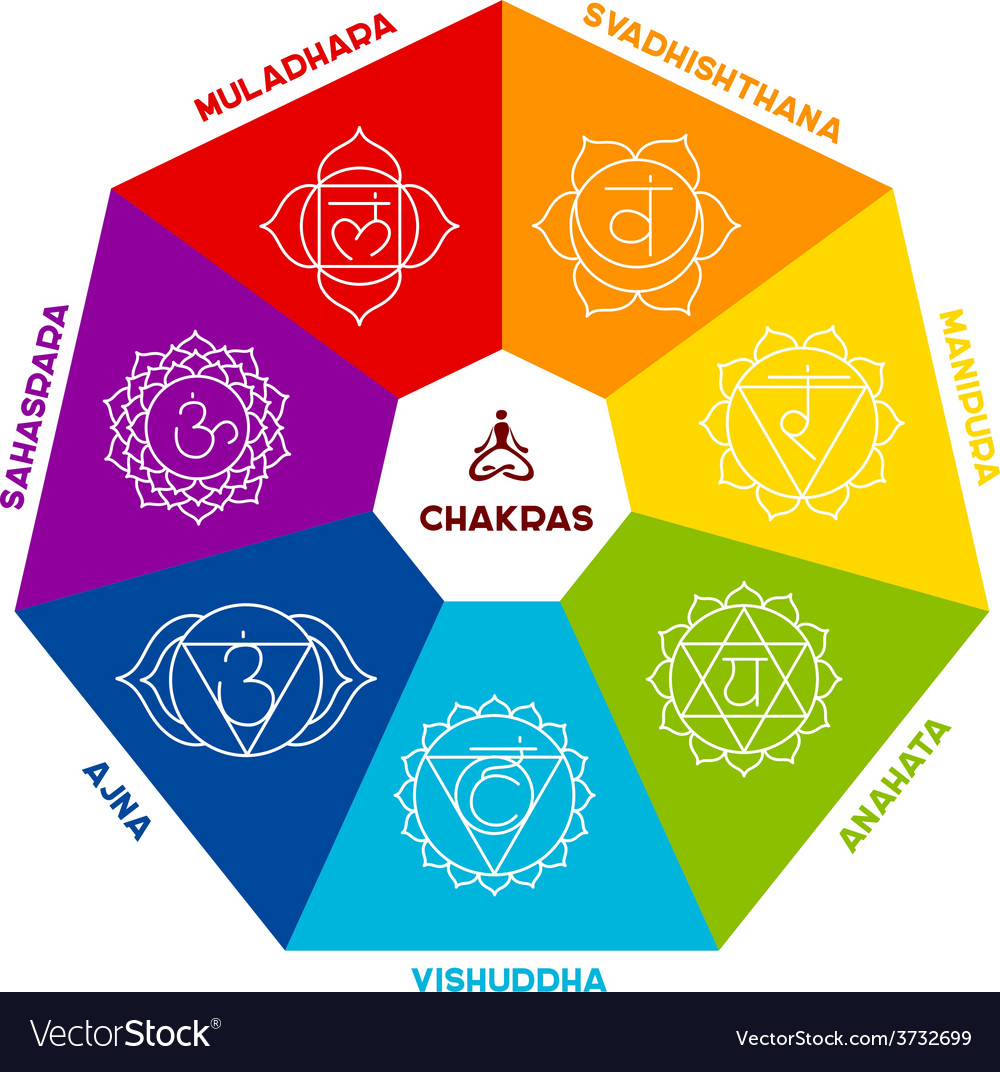 Color chakra scheme on white background vector | Price: 1 Credit (USD $1)