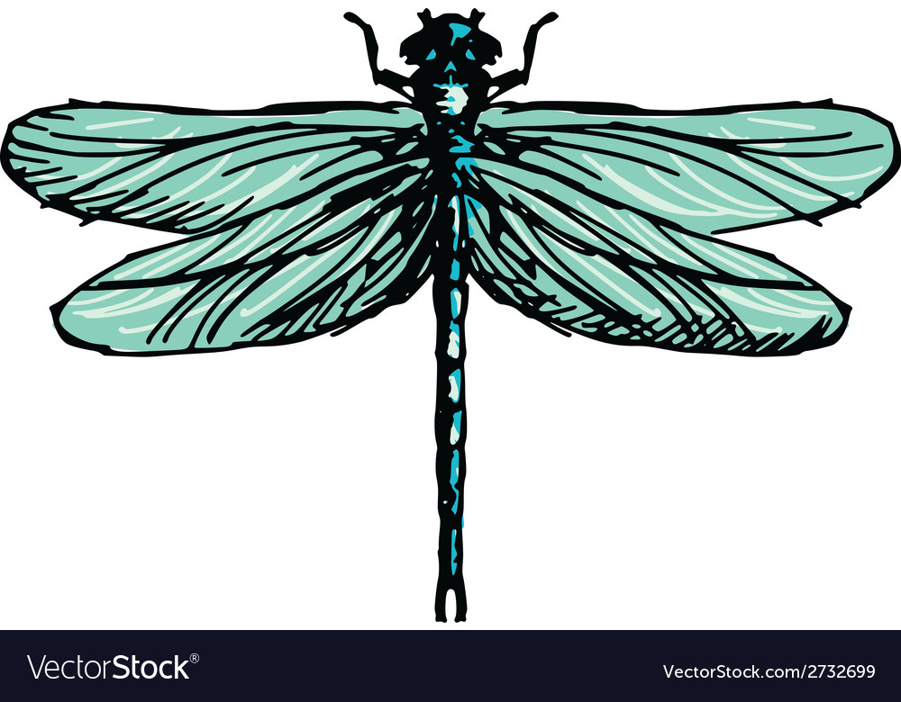 Dragonfly vector   Price: 1 Credit (USD $1)