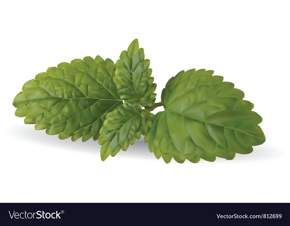 Mint leaves vector | Price: 1 Credit (USD $1)
