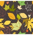 Seamless pattern with decorative autumn leaves vector