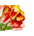 Border of red tulips over a white eps 10 vector