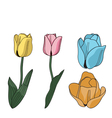 Brightly colored tulip flowers vector