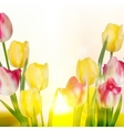 Green grass and pink tulips eps 10 vector